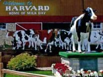milkdays